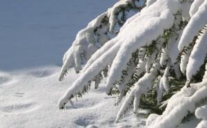 snow-fingers